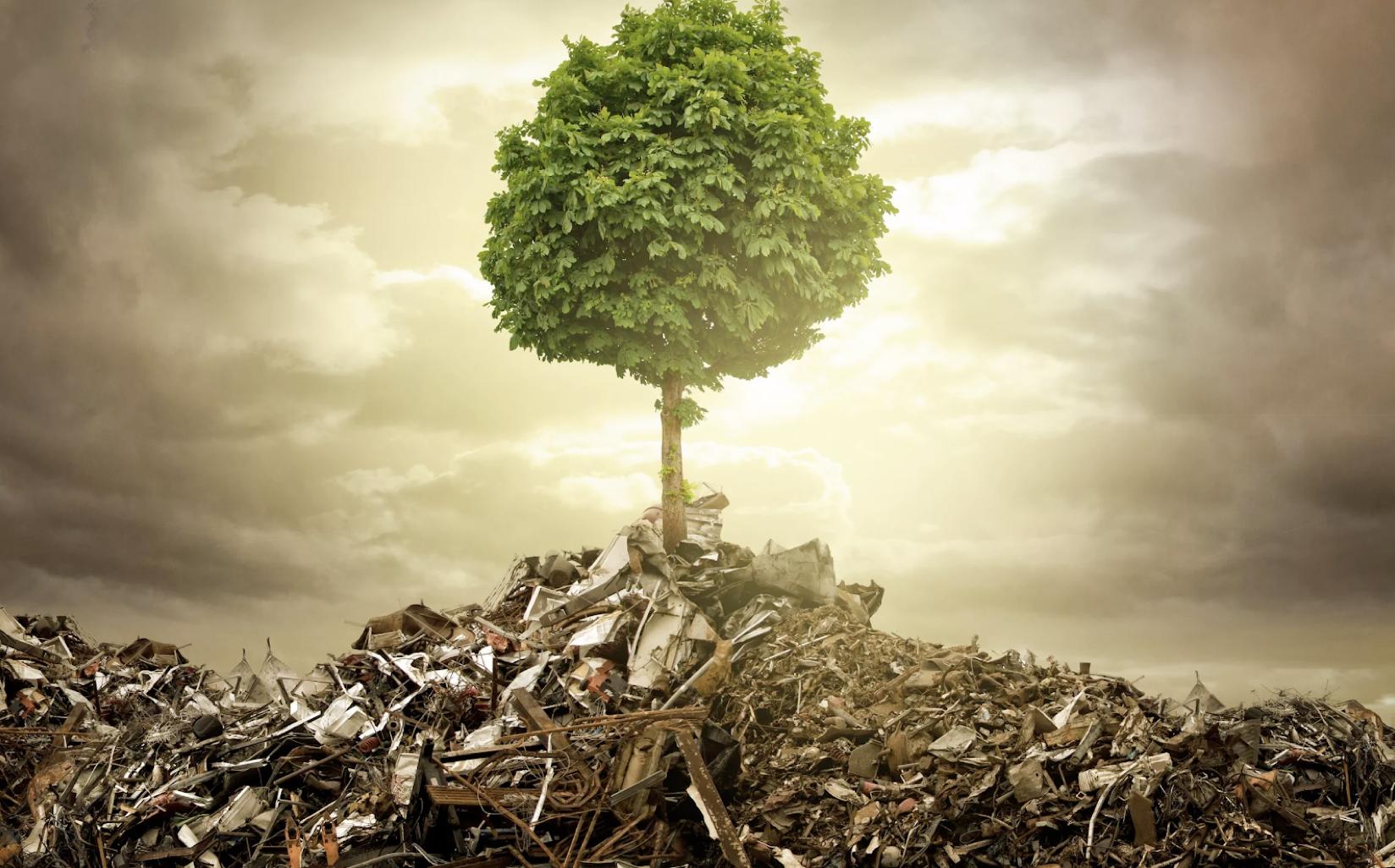 Картинки фото по теме экология